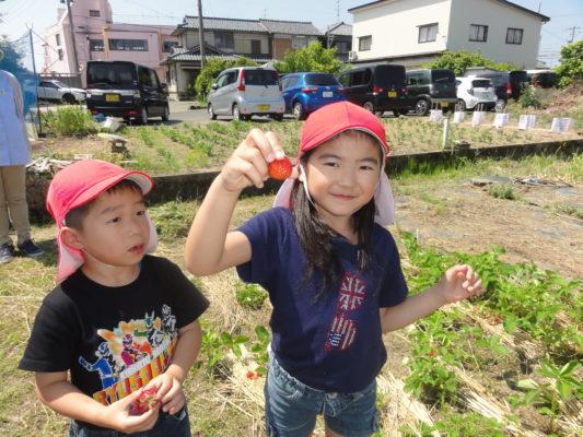 【すみれ組・ゆり組】イチゴ摘み&さくらんぼ収穫🍓🍒